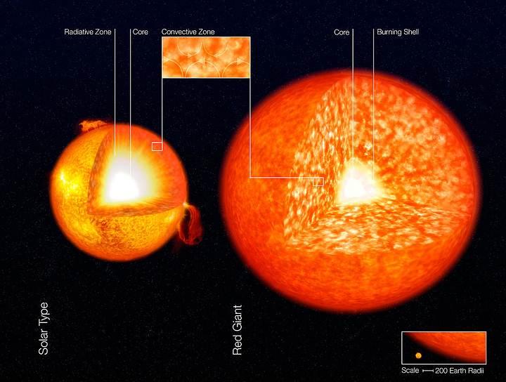 Representación artística de la estructura del Sol y una gigante roja, mostrando sus zonas convectivas. Estas son las zonas granuladas en las capas exteriores de las estrellas.