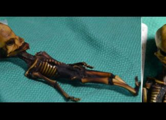Investigación revela los defectos en el análisis de la supuesta momia «alienígena»