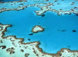 Gran Barrera de Coral muestra «signos significativos de recuperación»