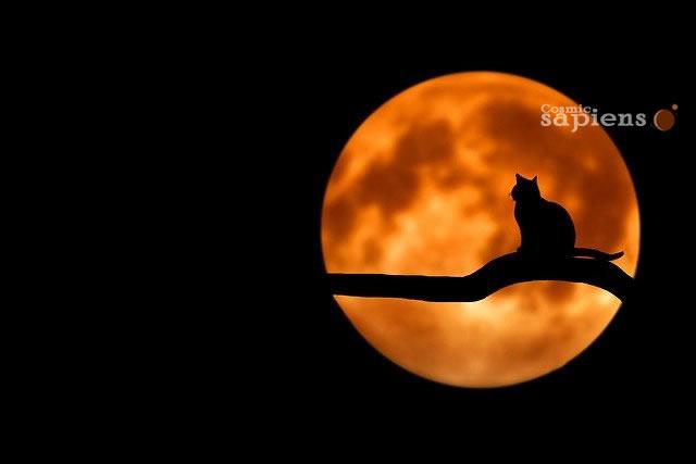 Luna llena afecta la forma en que la gente duerme, revela investigación